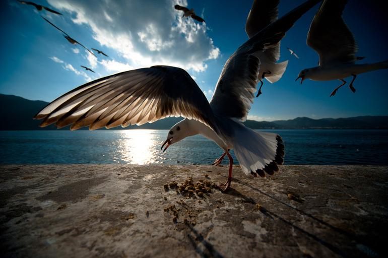 海�:#k�.&_高清图—用尼康–d700图片