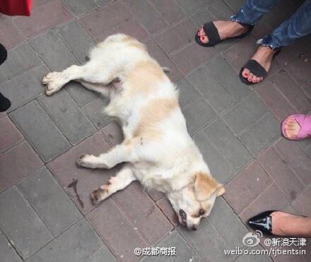 网友@曦曦曦小闹 天津王顶堤五超市对面男子摔死小狗遭暴打