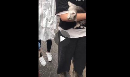 男子为泡妞买猫送人遭拒后摔猫 小猫当场死亡
